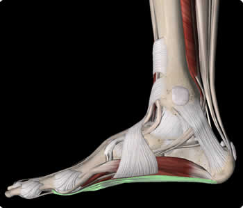 Image demonstrating the triangular nature of the foot